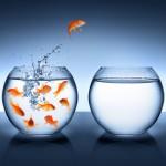 Engaging |Goldfish|  Facebook ads|3dragonmarketing