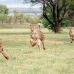 Fast| Cheetah|3DM|FacebookAds